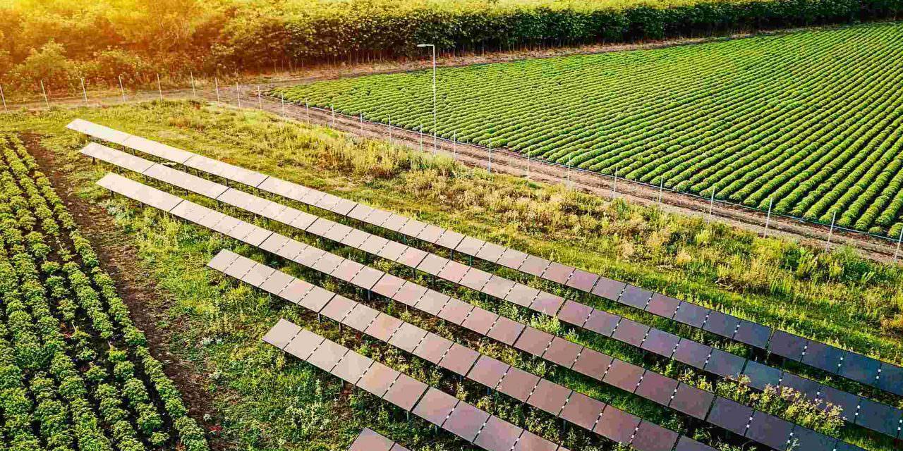 O que você precisa saber sobre energia solar no agronegócio