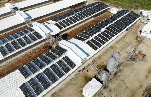 Conheça empresas do Brasil e mundo que mais investem em energia renovável
